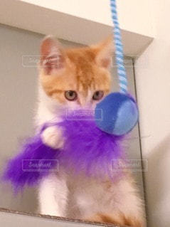 座っている猫の写真・画像素材[3130034]