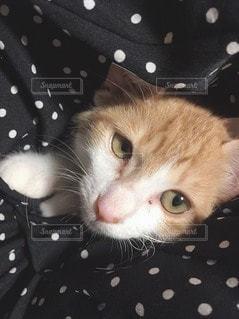 猫のクローズアップの写真・画像素材[3130057]