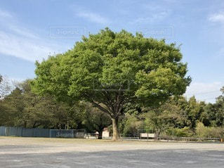 駐車場の木の写真・画像素材[3130523]