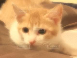 猫の写真・画像素材[3137927]
