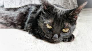 黒猫の写真・画像素材[3158199]