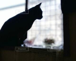 窓の前に座っている猫の写真・画像素材[3174057]