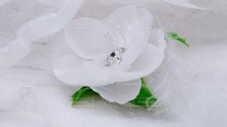 花のクローズアップの写真・画像素材[3274493]