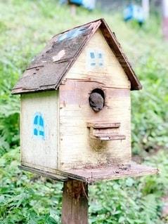 木製の表面にある鳥小屋の写真・画像素材[3346153]