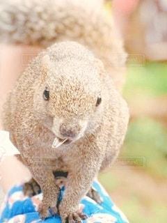 動物のクローズアップの写真・画像素材[3356918]
