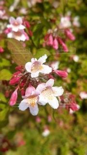 花のクローズアップの写真・画像素材[4361470]