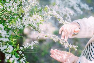 花を持っている人のクローズアップの写真・画像素材[3130105]