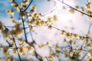 花に止まっている鳥の写真・画像素材[4262895]