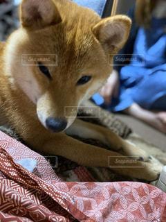 愛犬の写真・画像素材[3182046]