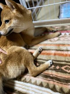 愛犬の写真・画像素材[3182084]