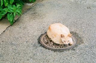 のんびり猫ちゃんの写真・画像素材[3133177]