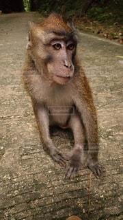 猿の写真・画像素材[3133423]