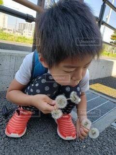 綿毛をフーッの写真・画像素材[3161097]