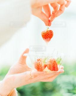 苺を持つ手の写真・画像素材[3134568]