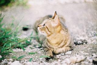 フィルムで猫の写真・画像素材[3134586]