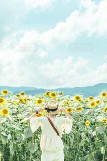 ひまわり畑と女の子の写真・画像素材[3658951]