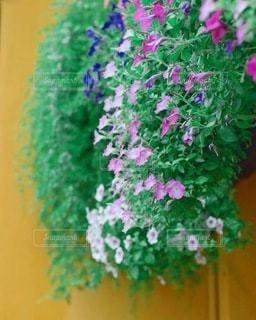 花のクローズアップの写真・画像素材[3393660]