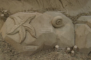 ヒトデと巻貝の写真・画像素材[3808399]