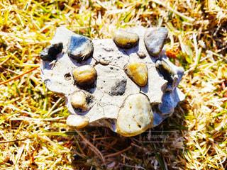 石の写真・画像素材[3527121]