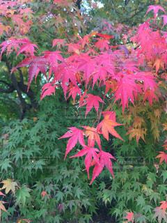 秋の公園の写真・画像素材[3152226]