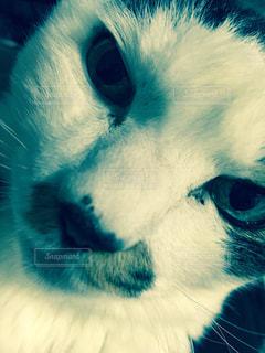 猫の写真・画像素材[125060]