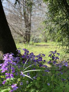 植物の上の紫色の花の写真・画像素材[3148248]