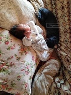 ベッドに横たわる猫の写真・画像素材[3144301]