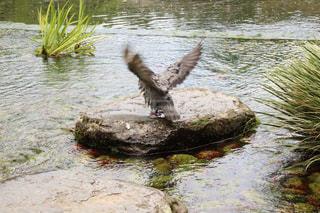 羽ばたきの写真・画像素材[3149621]