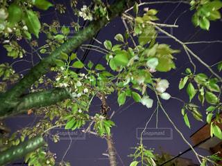 緑の植物のクローズアップの写真・画像素材[3145526]