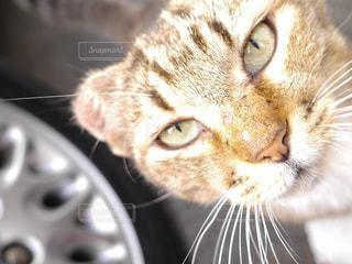 猫のクローズアップの写真・画像素材[3437767]