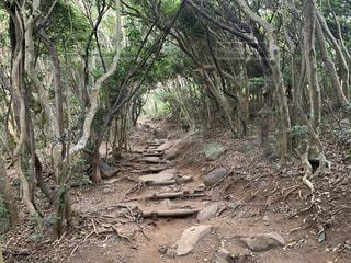 森の中の木の写真・画像素材[3146856]