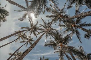 ワイキキビーチにての写真・画像素材[3149769]