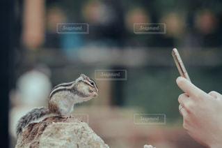 リスを撮影する人の写真・画像素材[3440269]