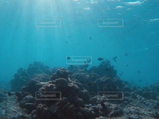 ダイビングの写真・画像素材[3150387]