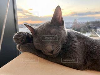 猫の写真・画像素材[3163700]