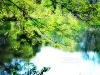 水辺のみどりの写真・画像素材[3157429]