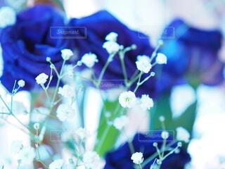 青い薔薇の写真・画像素材[3874494]