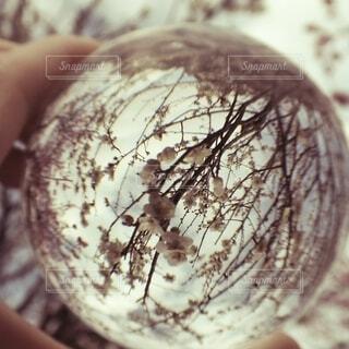球体の中の白梅の写真・画像素材[4279494]