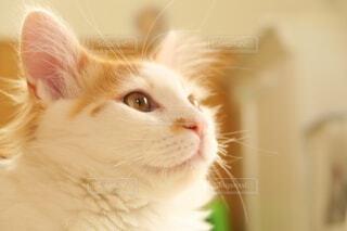 ネコさまの写真・画像素材[4356119]