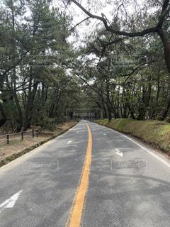 道路の脇に木がある道の写真・画像素材[3150820]
