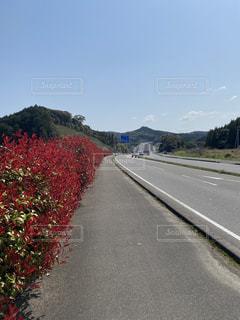 道路の脇に木がある道の写真・画像素材[3150918]