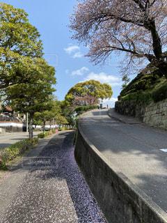 道路の脇に木がある道の写真・画像素材[3150919]