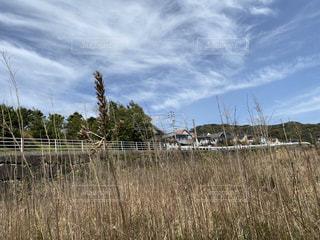 背の高い草の景色の写真・画像素材[3152337]
