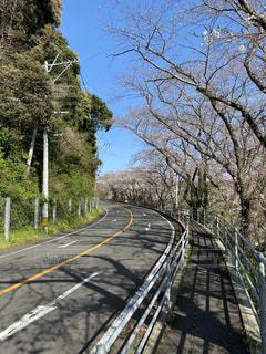 レールの側面に木がある道の写真・画像素材[3152425]
