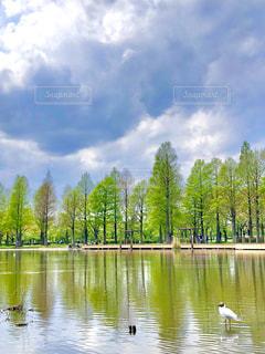 木々に囲まれた水の体の写真・画像素材[3152024]