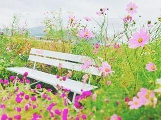 お花畑とベンチの写真・画像素材[3546304]