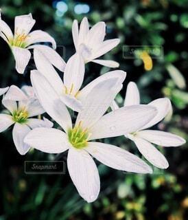 花のクローズアップの写真・画像素材[3688508]