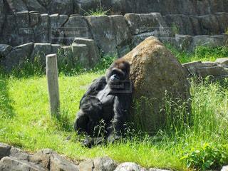 No.125713 動物園
