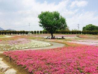 草と木のある道の写真・画像素材[3153762]