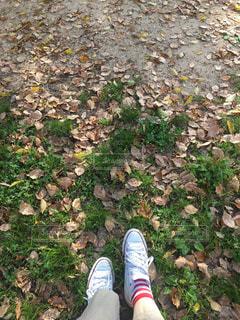 草のクローズアップの写真・画像素材[3154608]